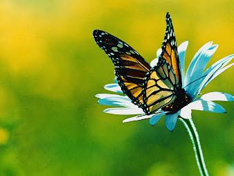 #2 Butterfly Wallpaper
