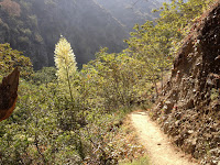 Traveling south on Fish Canyon Trail, Angeles National Forest