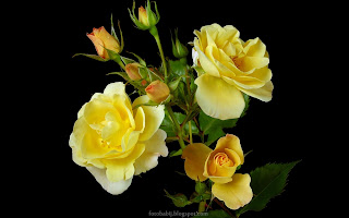http://fotobabij.blogspot.com/2015/03/roza-kwiatostan.html