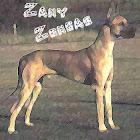 Zany Zongas