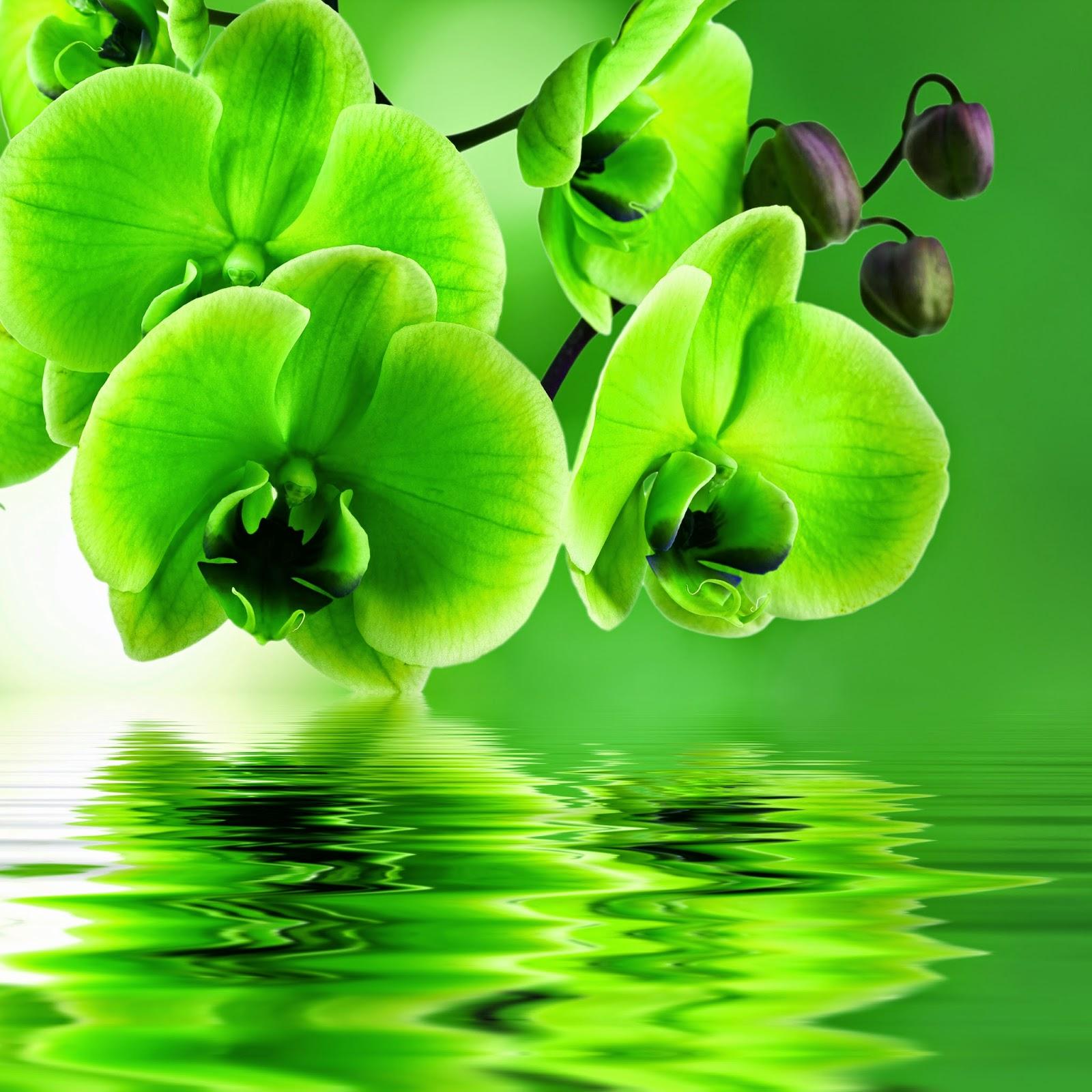 Imagenes Bonitas De Flores Para Fondo De Escritorio