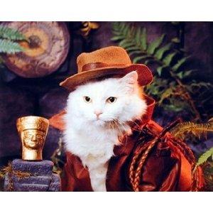 http://2.bp.blogspot.com/-5g1H-VDJ1O8/TgzWgs0LWvI/AAAAAAAAAs8/8k0o_SIgNVM/s1600/indiana+jones+cat.jpg