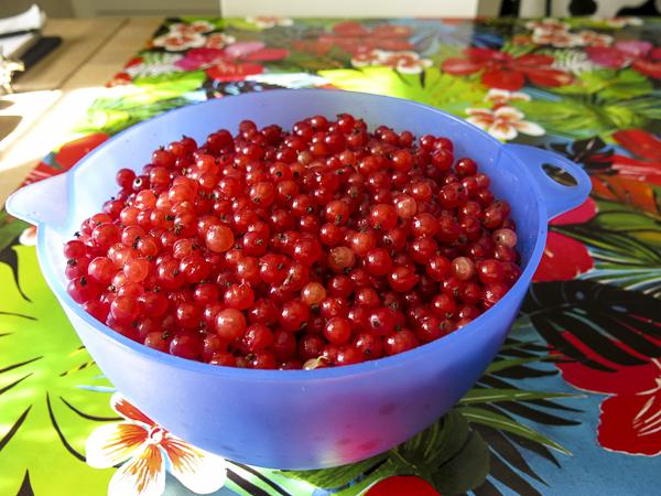 redcurrants, röda_vinbär