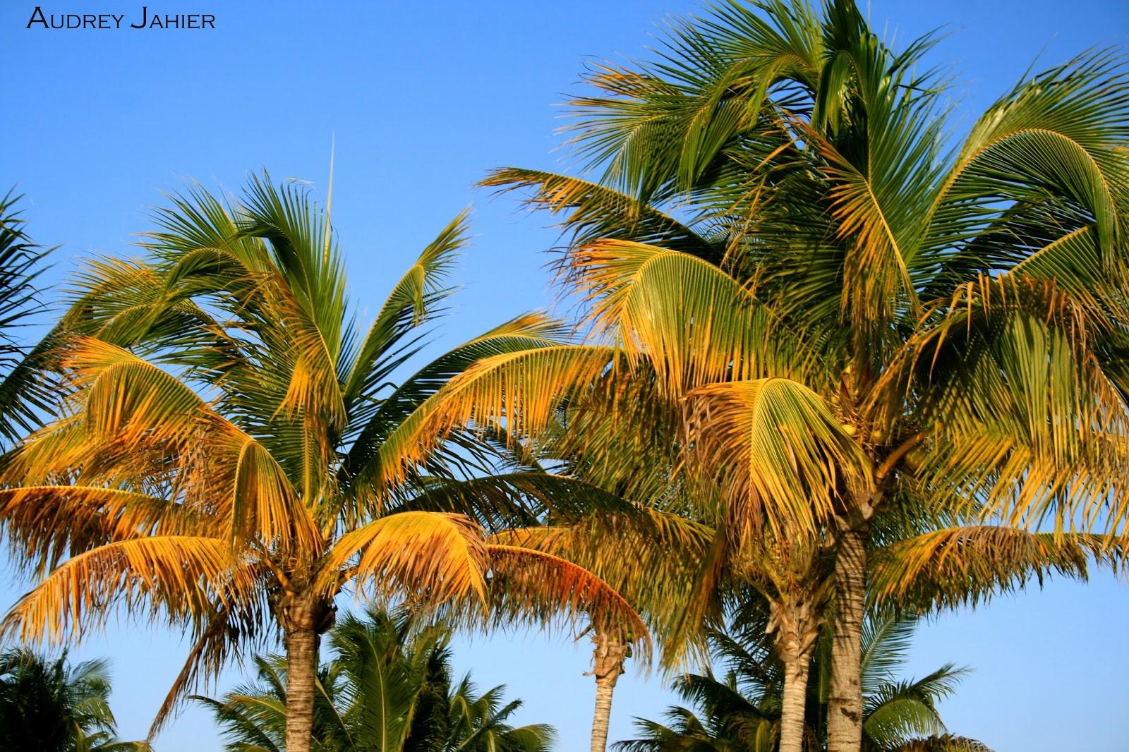Playa-del-carmen-mexique-mexico