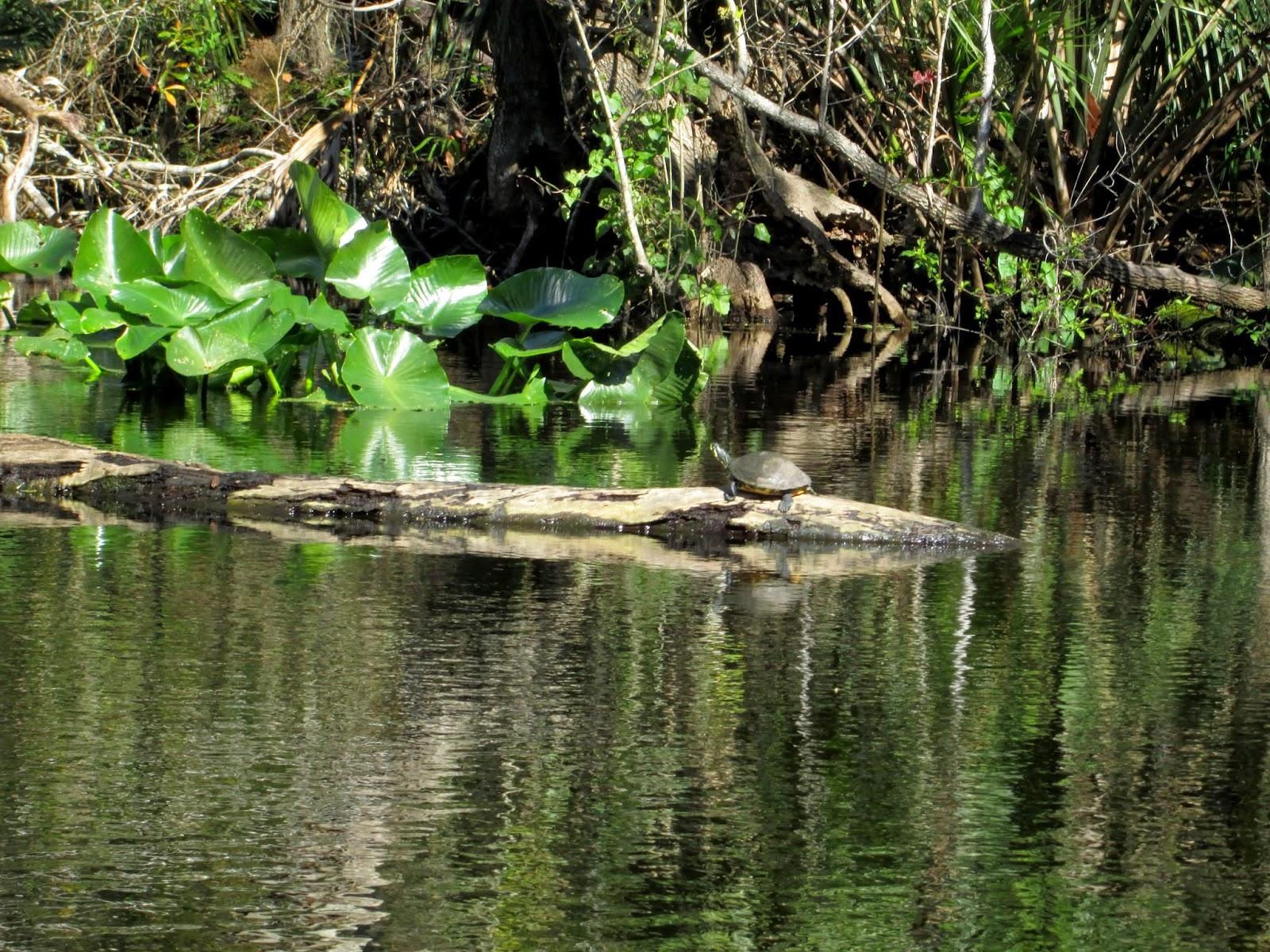 Wekiva River Monkeys The Middle Wekiva River is