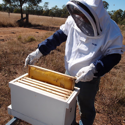 eight acres: buying honey bees