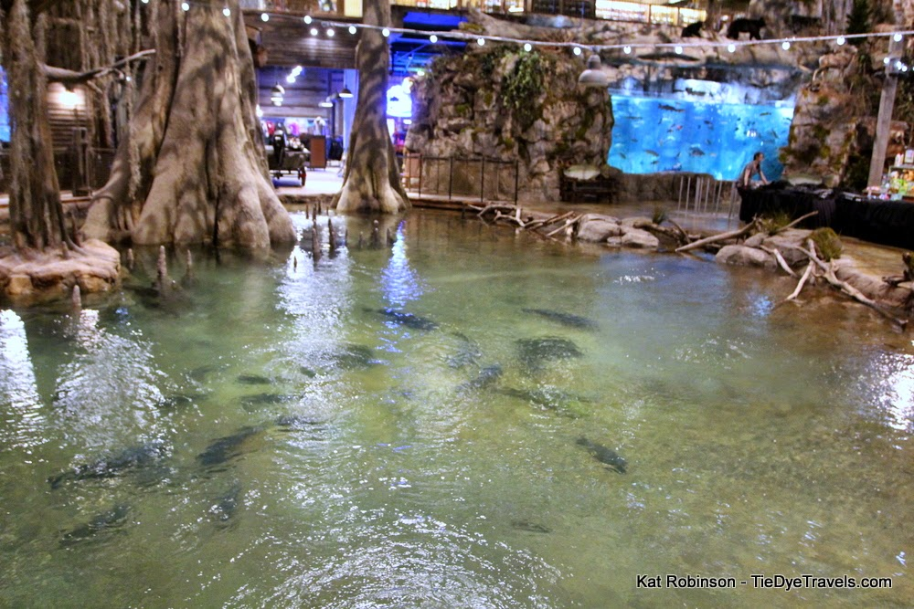 Inside bass pro at the pyramid a massive cacaphony of for Fishing in memphis