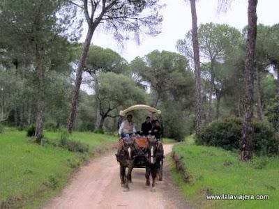 Ruta Donana Coches Caballos, Camino Rociero