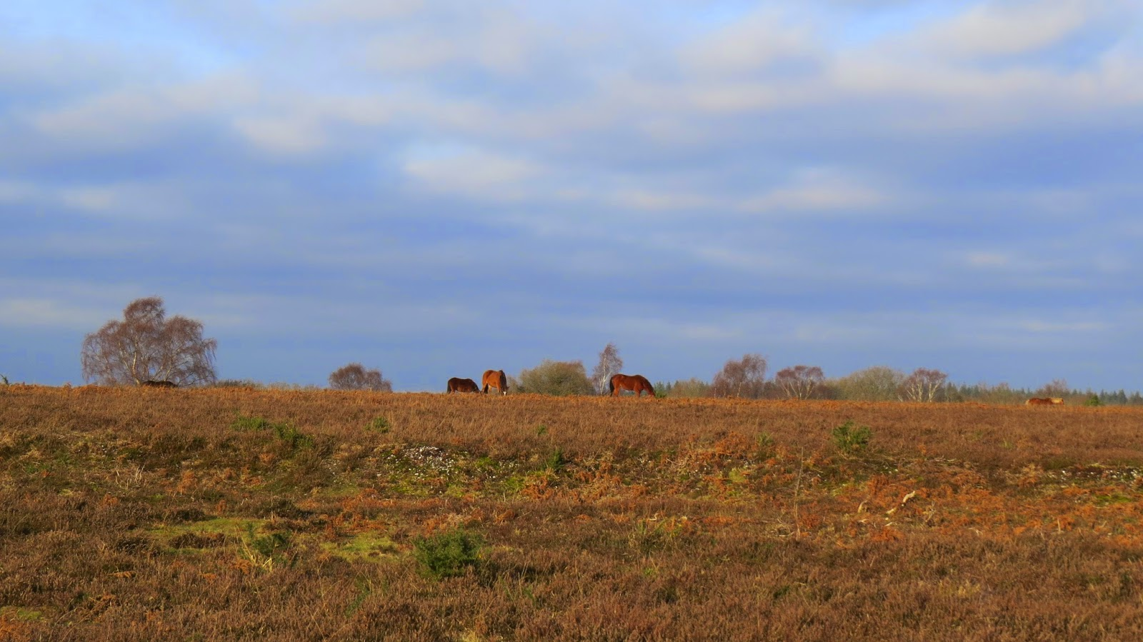 Horses in the scrub of Lin Wood in the New Forest