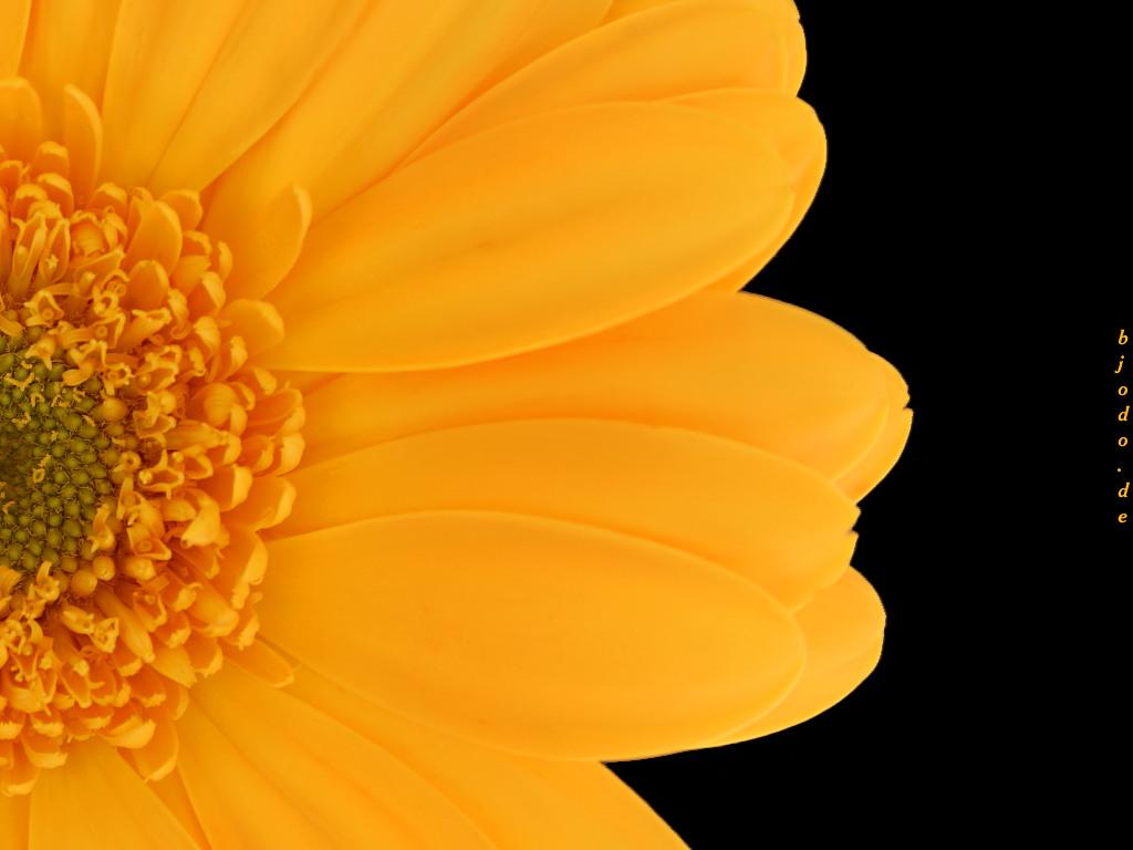 http://2.bp.blogspot.com/-5gqX2BgZPgc/UAKo57aWXII/AAAAAAAAEOA/fNyQGWbU2XU/s1600/flower-mobile-phone-wallpapers.jpg