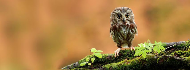 Owl Is Watching You