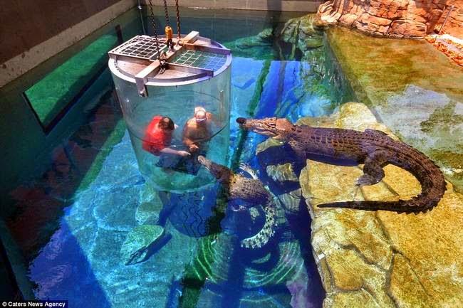 nadando con cocodrilos