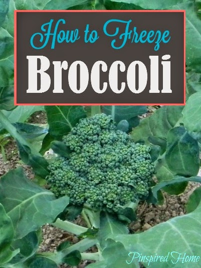 http://pinspiredhome.blogspot.com/2014/07/how-to-freeze-broccoli.html