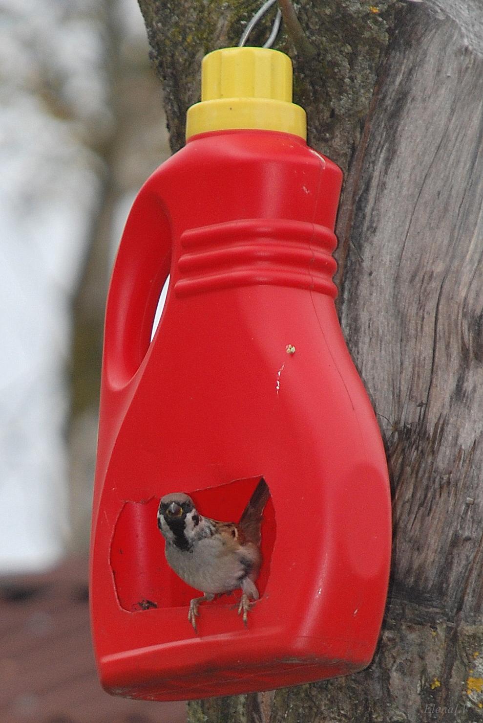 Красивые поилки для птицы своими руками