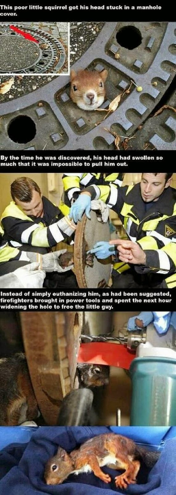 People doing amazing things for animals (28 pics), firefighters rescued a squirrel stuck his head on a manhole
