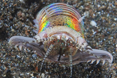 5 Hewan Laut Aneh Ini Berasal Dari Planet Lain, Mengapa?
