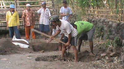 penggalian lubang utk molase rumput kering dan pupuk organik