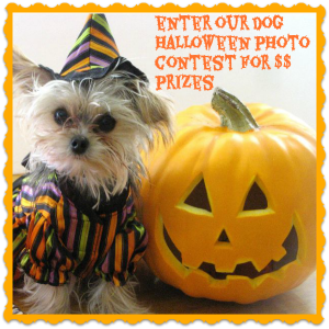 everyone loves a halloween costume contest heres a great one for your dogs and you can win some great prizes too