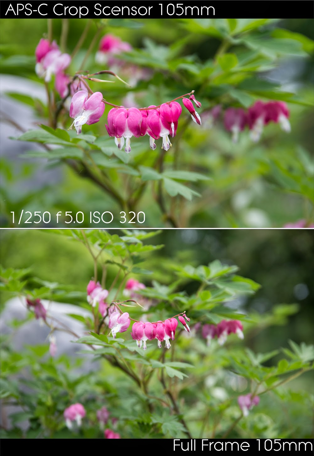 ihpoc Photography - In Hot Pursuit of Color: Full Frame vs. Crop ...