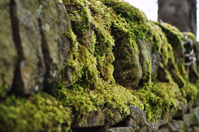 Lichen covered dry stone wall in Yorkshire