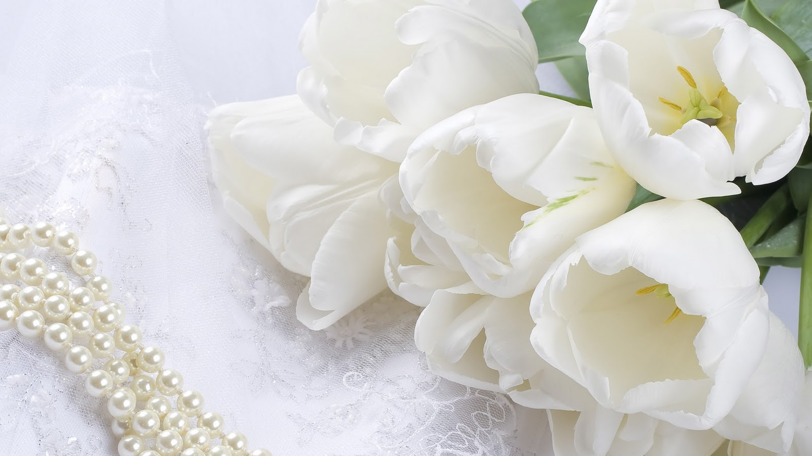 Zeeshan news most beautiful flower hd wallpaper izmirmasajfo