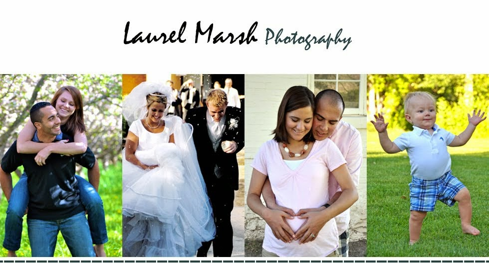 Laurel Marsh Photography