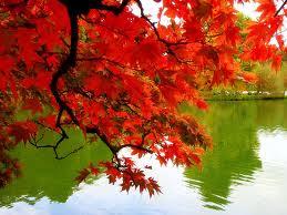 http://2.bp.blogspot.com/-5jQeZxeqo_4/UJ7NziNLECI/AAAAAAAAKpE/kkT1eQ3GqLo/s400/falling+leaves.jpg