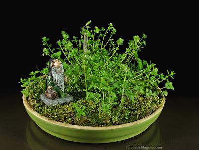 http://fotobabij.blogspot.com/2015/04/miniaturowy-ogrod-zarosla-figurka.html