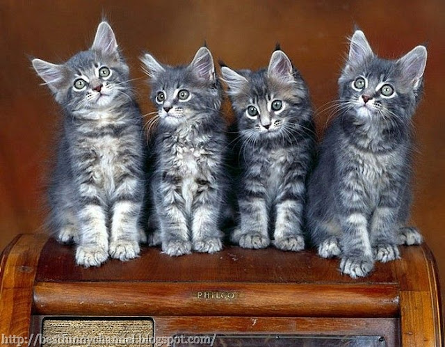 Four beautiful kitten.