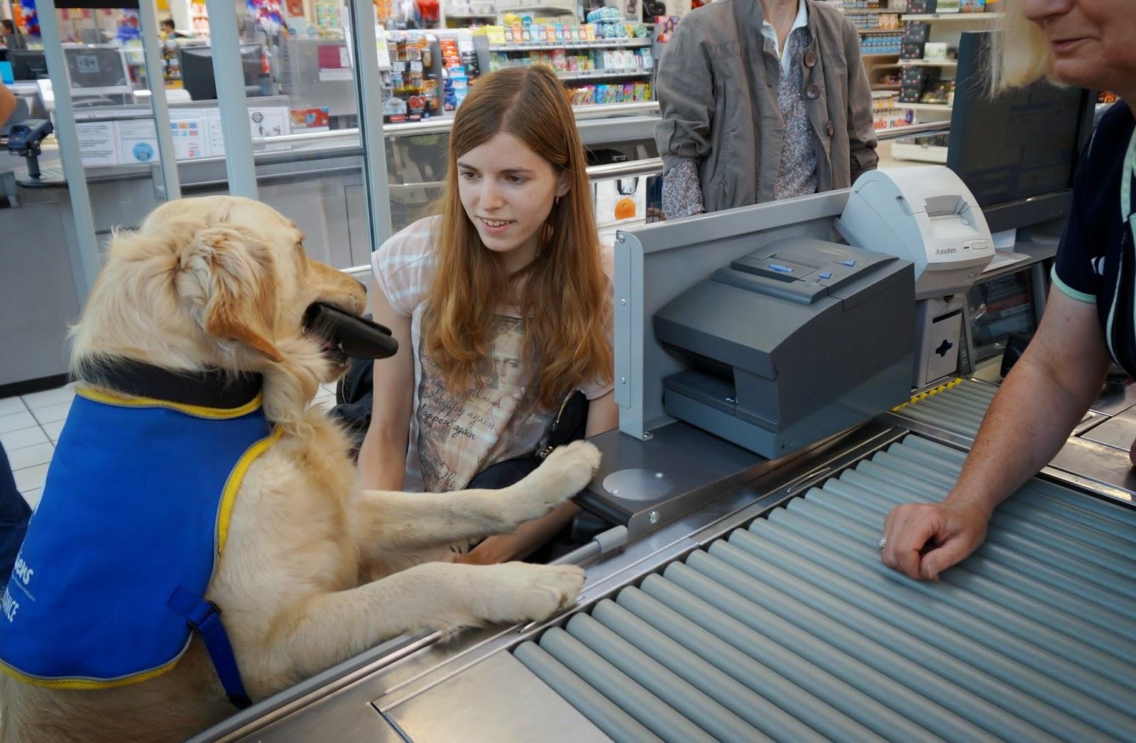 HANDI'CHIENS Bretagne: Obtenir un chien d'assistance