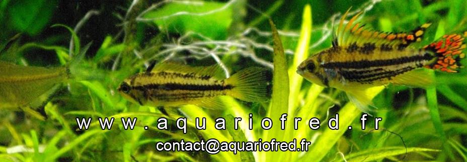 AquarioFred