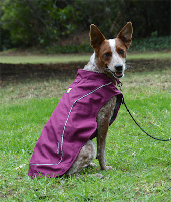 Purple Ruffwear jacket