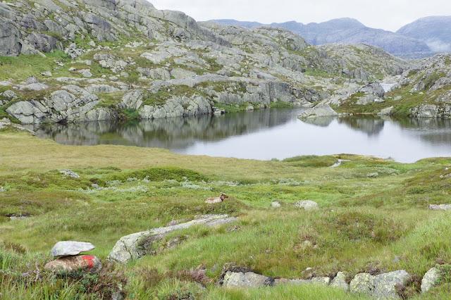 Norge 11´ - Lysefjorden rundt...