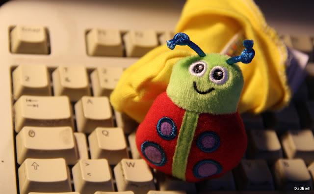 Coccinelle sur un clavier