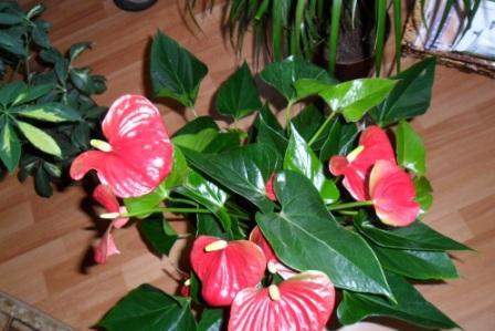 Какие комнатные растения нельзя держать дома, фото 29