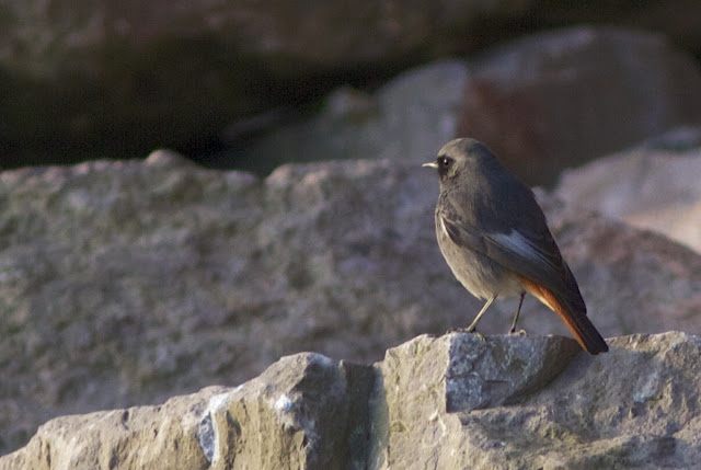 Birds, Birding, Photography