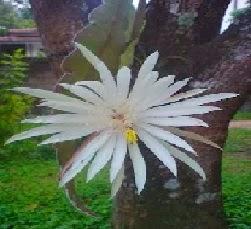 7 Jenis Bunga Paling Langka di Dunia