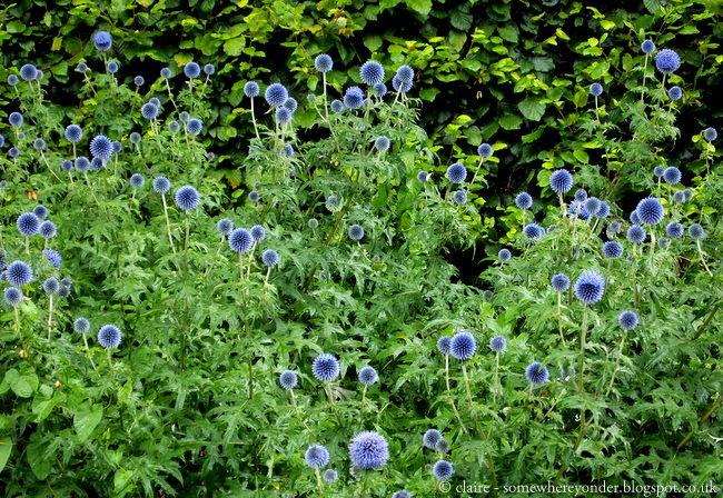 Flowers in the Botanic Gardens, Glasgow