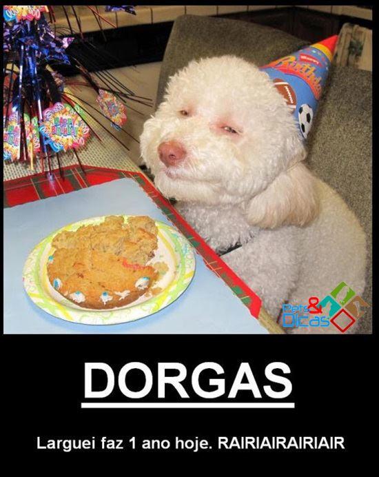 Cão comemorando aniversário