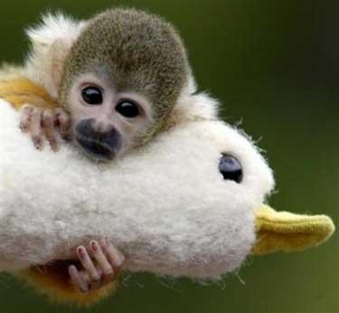 Monkey funny cute - photo#24