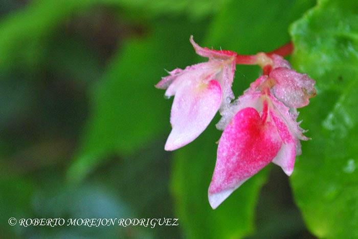 Plantas y flores  en el Pico turquino