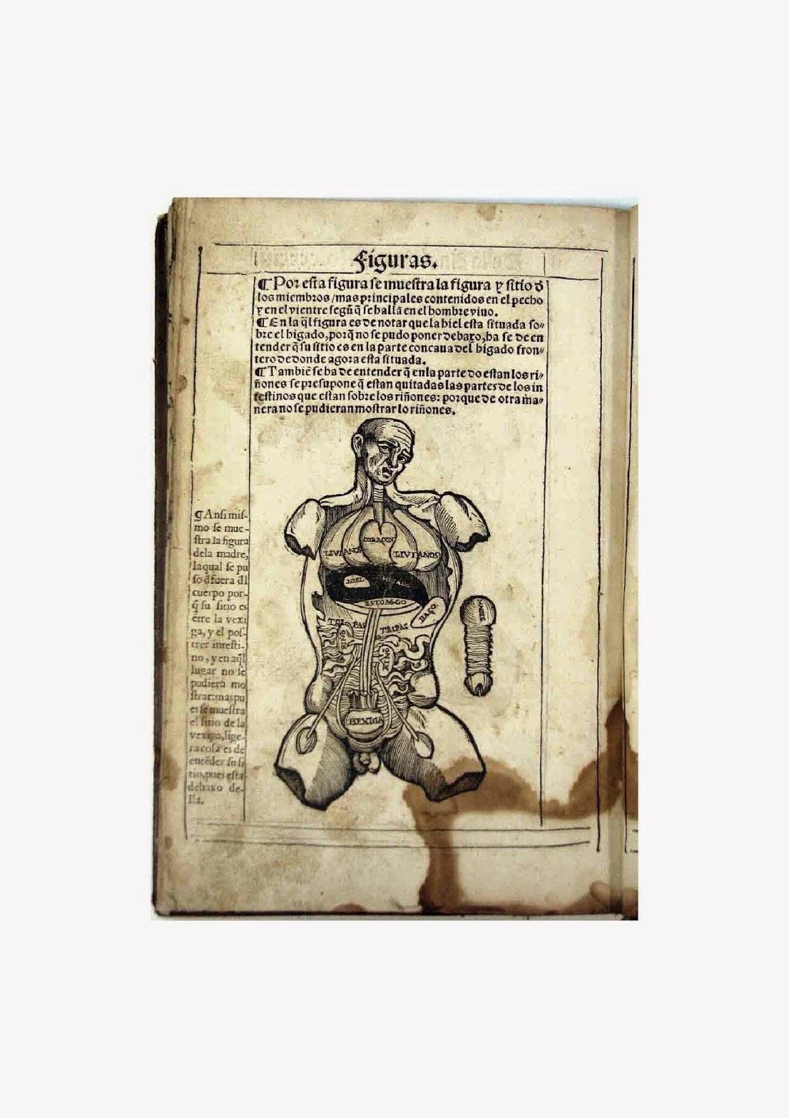 """""""Libro de la anothomia del ho[m]bre"""" de Bernardino Montaña de Monserrate."""