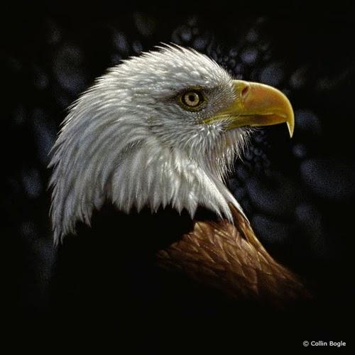 19-Bald-Eagle-Collin-Bogle-Animal-Wildlife-in-Art-www-designstack-co