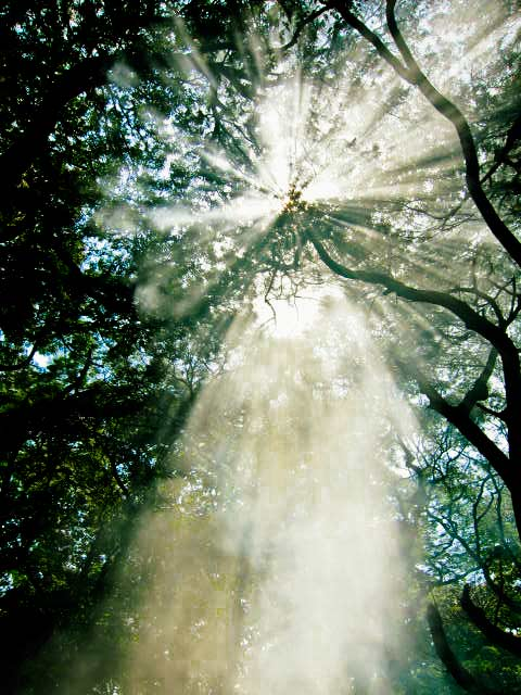 Nature's Halo…