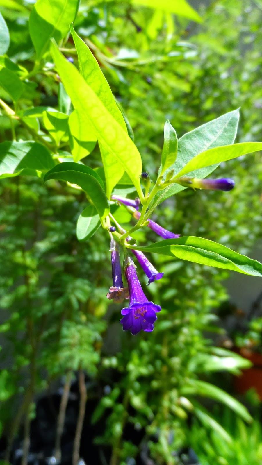 Vivero de plantas bonaerenses for Viveros de plantas