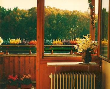 秋天的兰紫橙黄。对家人和朋友的思念皆在花中。