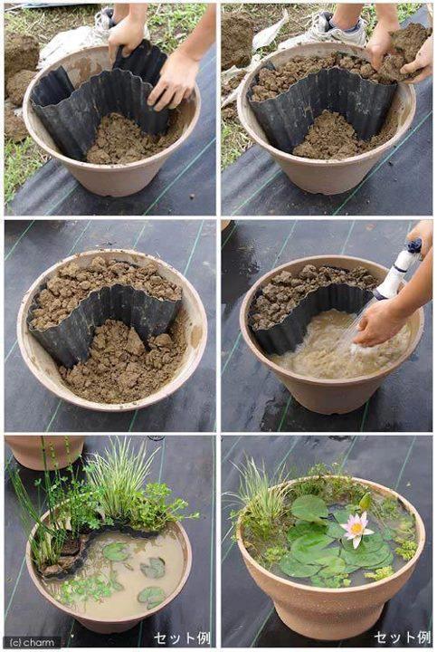 mini jardim aquatico: de plantas aquáticas uma dica decomo fazer um mini jardim aquático
