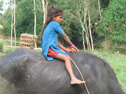 riding the buffalo - nepal