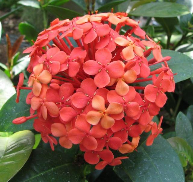 flores jardim ano todo : flores jardim ano todo:Plantas: Como Ter Flores o Ano Todo? [ Verão ]