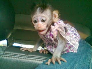 Bona diajak jalan-jalan naik mobil, pakai baju ketika masih kecil.
